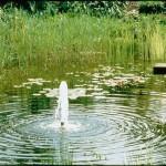 oase14.jpg