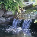 oase22.jpg