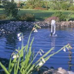 oase5.jpg