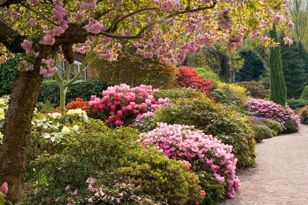 Английска градина
