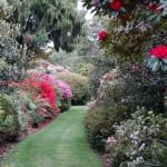 Пътека с рододендрони