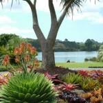 Градини от Нова Зеландия