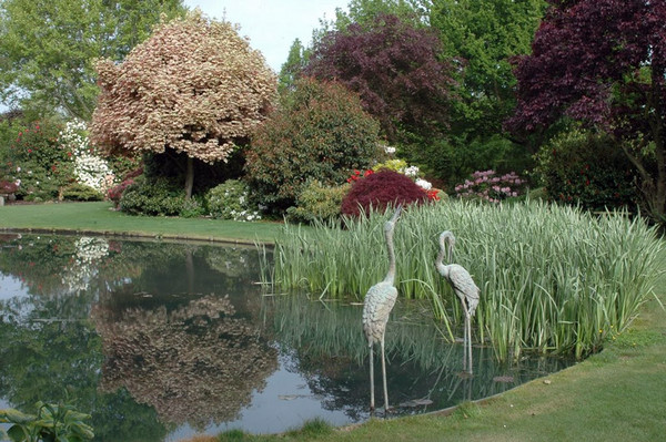 for Large pond design ideas