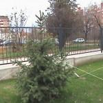 коледно дърво - елха
