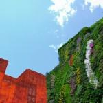 Вертикалан градина - испания