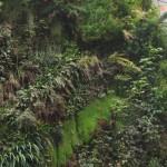 Вертикална градина