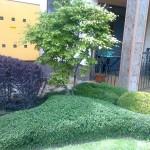 Резитби на декоративни храсти