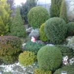 Резитба на храсти