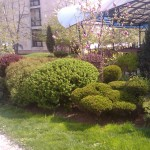 Подрязване на храсти
