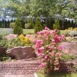 Скален кът с плачеща роза