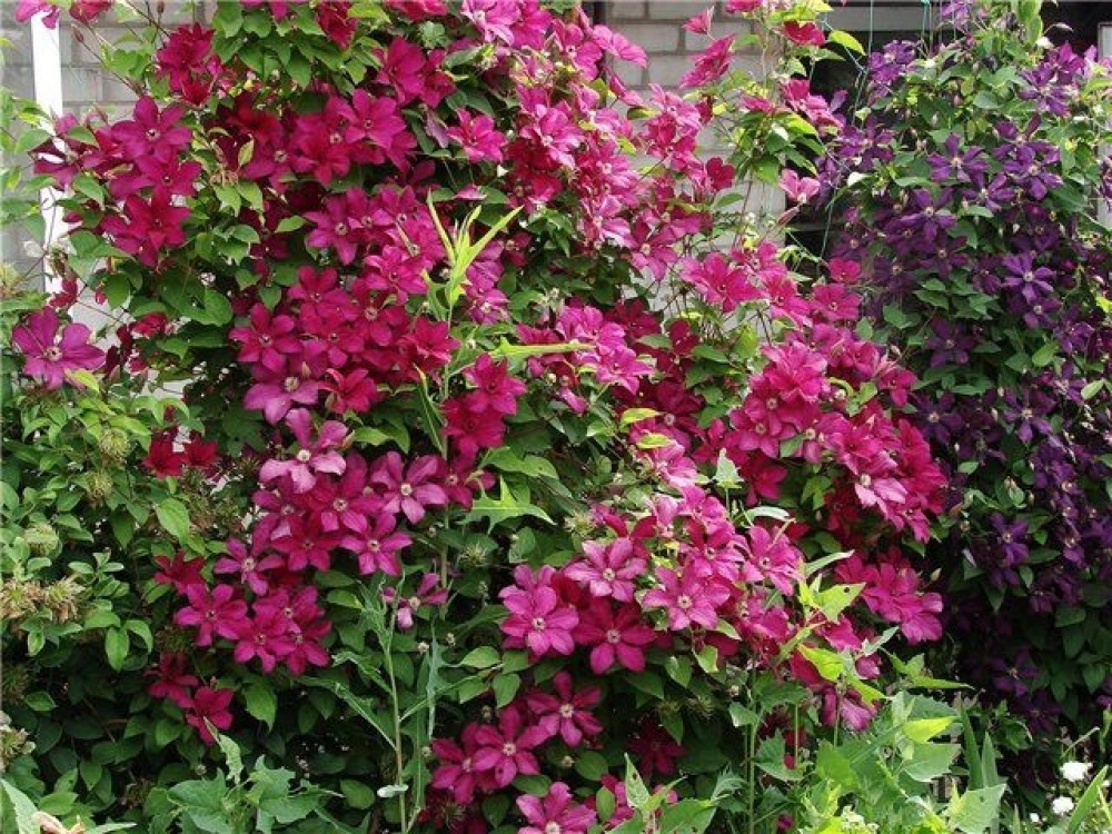 Градина с повет