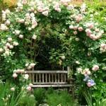 Увивни рози