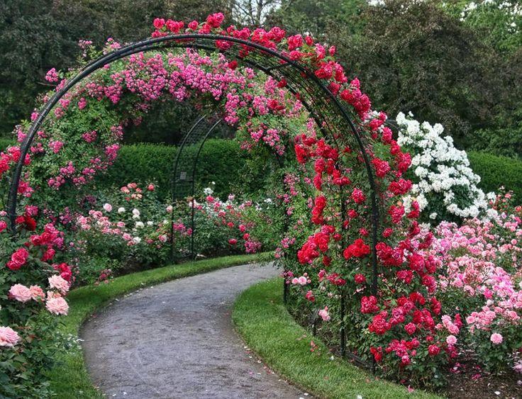 Алея с рози