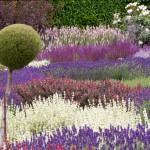 filoli-knot-garden-flowers
